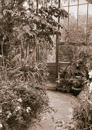 East Ruston Old Vicarage Greenhouse
