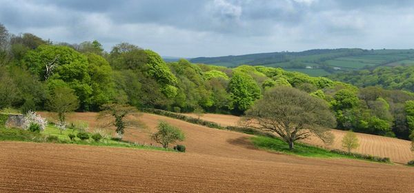 Cornish Spring Countryside (c) Mark A Coleman via Flickr