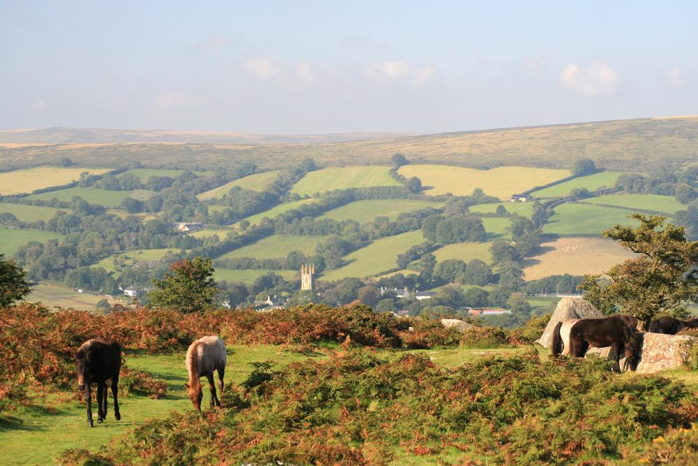 Image result for dartmoor national park