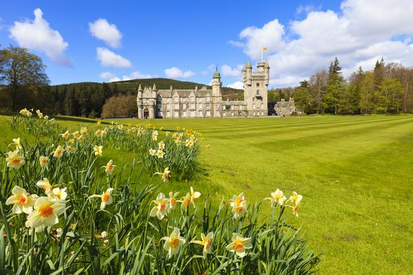 Balmoral Castle on a sunny day, with daffodils in the foreground