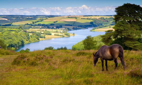 Exmoor Pony grazing, Wimbleball lake and sunlit fields in background