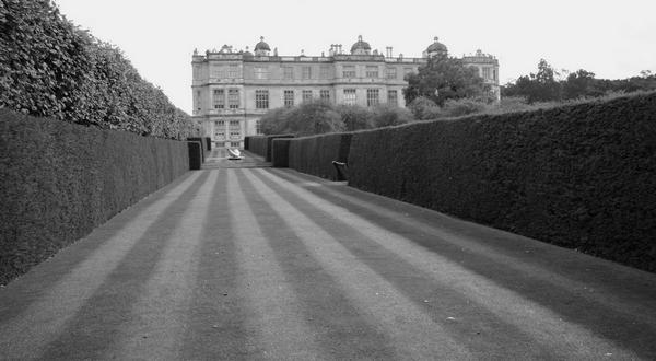 Black and white photo of striped grass between hedges, the Long Garden, Longleat