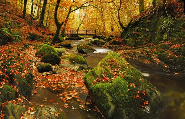 View of Stockghyll in the Autumn, with stream and fallen leaves