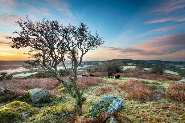 A frosty March sunrise at Helman Tor near Bodmin in Cornwall