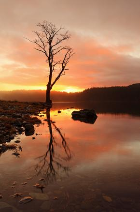 A lone tree reflecting on the water of Loch Ard as the sun emerges above the hills