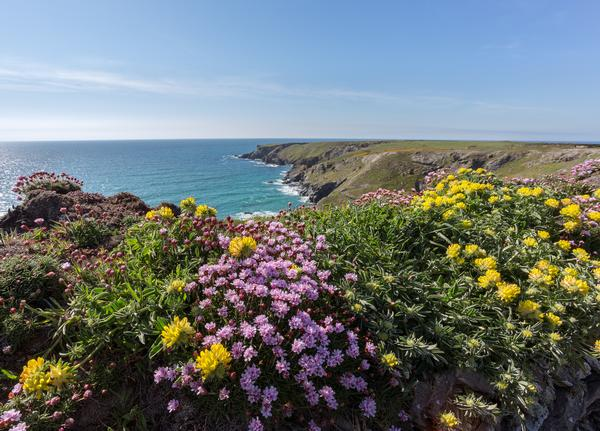 South West coast path near Bedruthan Steps Cornwall Uk