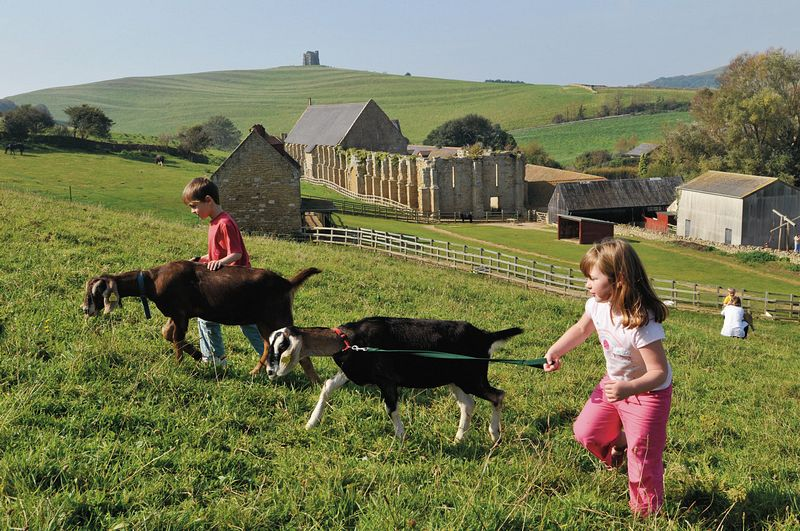 Abbotsbury Childrens Farm On Aboutbritain Com