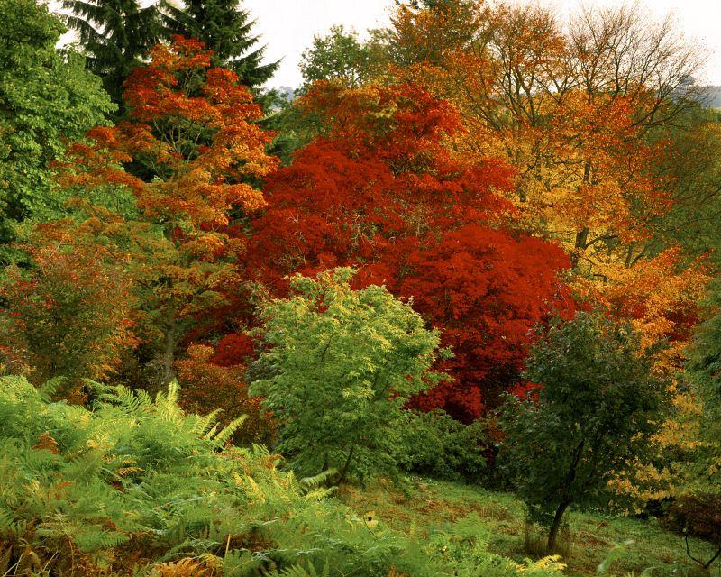 Winkworth Arboretum On Aboutbritain Com