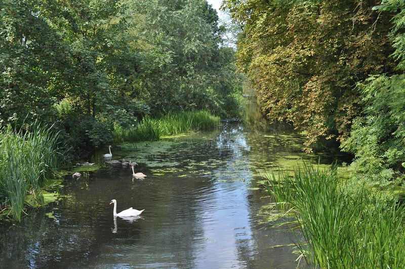 Hinchingbrooke Country Park On Aboutbritain Com