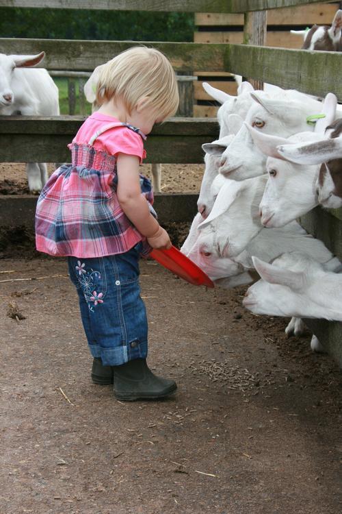 Longdown Activity Farm On Aboutbritain Com
