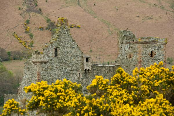 Lochranza Castle view with flowers in foreground