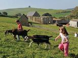 Abbotsbury Childrens Farm