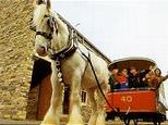 Bradford Industrial Museum & Horses At Work