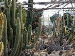 Hollygate Cactus Garden and Nursery