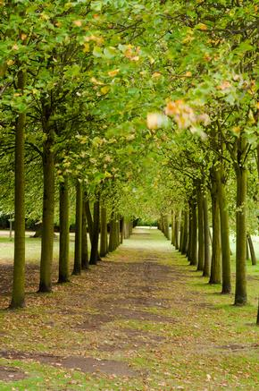 Avenue of trees at Wrest Park
