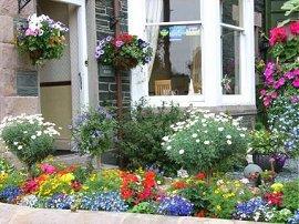 Blooming Lovely! award winning garden