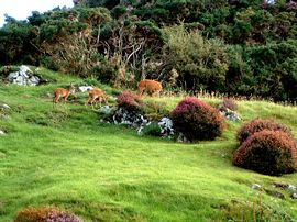 Roe Deer Grazing Beside Polcraig Guest House