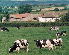 Rydon Farm, Woodbury