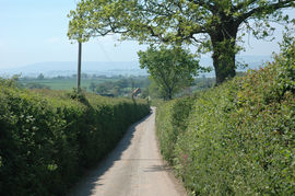 Rydon Lane