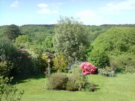 Garden at breakfast time.