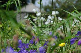 Brook Barn Garden