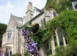 Monkton Wyld Court and Bee