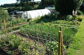 Organic Garden at Monkton