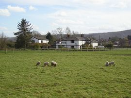 Rear of propertry with lambs