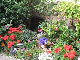 Part of summer garden.