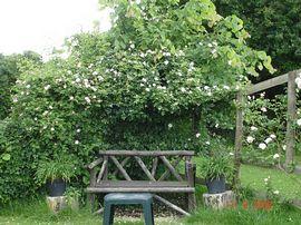A quiet garden corner