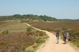 The path to Fritham