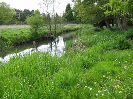River Wylye in the Spring