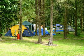Wooded Glade Camping