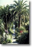 Tresco Abbey Gardens - Picture 