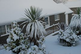 Rhiwlas Holiday Cottages - Not a common sight