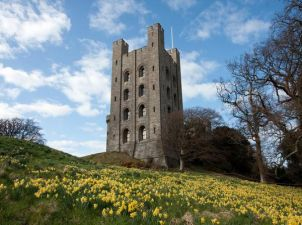 Old tower in field of daffodils against a blue sky