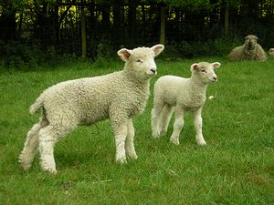 South of England Rare Breeds Centre