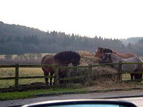 Horses at Aberfoyle