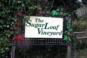 Sugar Loaf Vineyards.  Abergavenny © Brian Griffiths