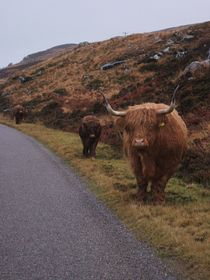 The long road home Road to Applecross © louise pond