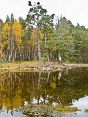 Things To Do In Aviemore