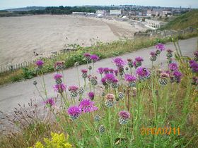Colourful wild flower's on Nell's Point © Philip Cookson