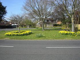 Junction of Park Lane & Hulbert Road. Daffs planted by Bedhampton volunteers © Mrs Audrey Crook