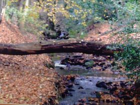 Autumn Stream Biddulph © Stephen Oakes