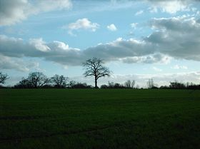 View from Blackmore © Nat Whalley