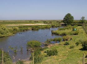 the Wild fowl collection at  Blakeney  on the north norfolk coast  © PW Batchelor