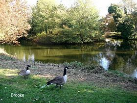Another village pond © Peggy Cannell