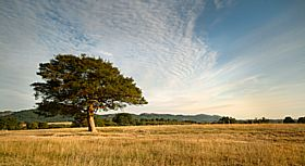 This is a view looking across Castlemorton common, South to North along the Malvern Hills. © Kim Walton