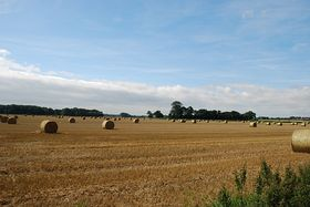 The Fields at Cawood . © Mr Philip Moon (HKt.B)