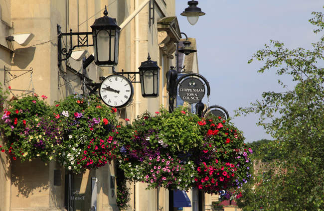 Floral Display in Chippenham